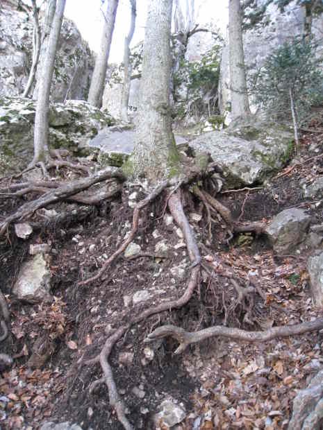 freiliegende Baumwurzeln