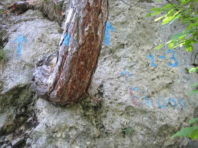 blaue Farbe auf Fels und Baum