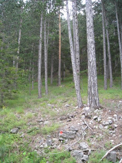 Wald und roter Punkt