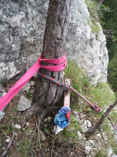 Baum,Kassette,Seil