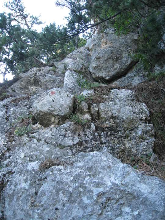 Fels,Erde,Föhren