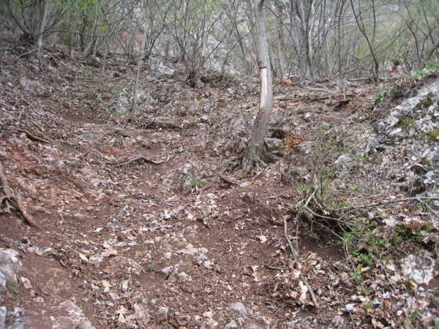 Wald und Erde