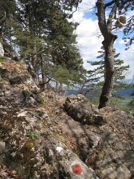 Wald und Schrofen