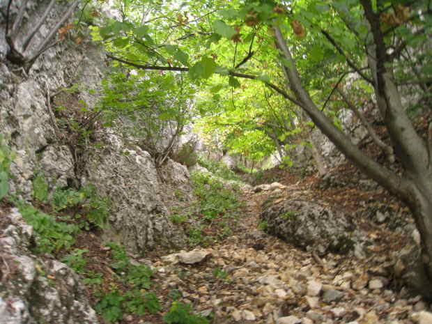 Schutt und Bäume
