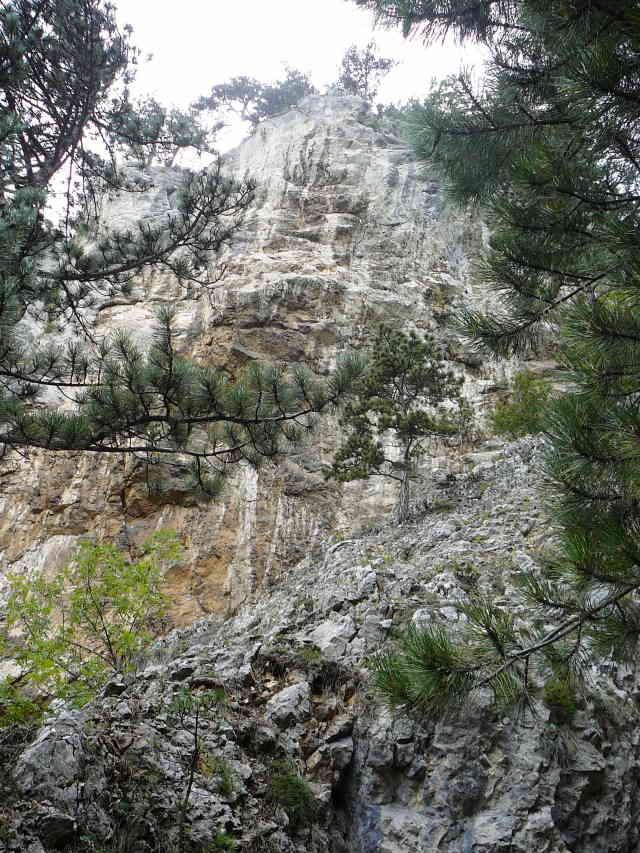 Blick zur Felswand